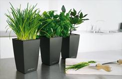 Bồi bổ phổi bằng cách trồng cây trong nhà