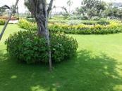 Trồng cỏ trong thiết kế cảnh quan