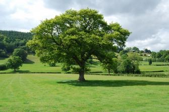 Trồng cây xanh trong vườn phù hợp với phong thủy