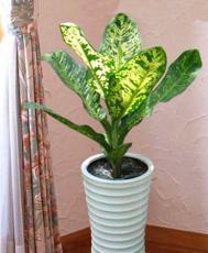 Các loại cây nôi thất phổ biến tại TPHCM phần 1