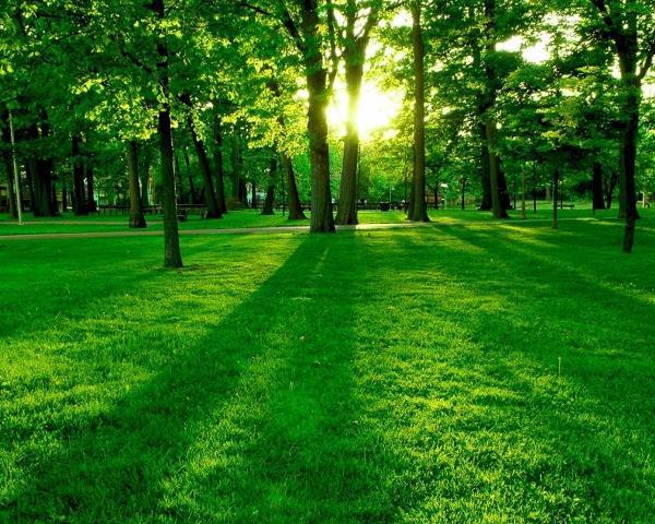 Cây xanh có tác dụng làm sạch không khí