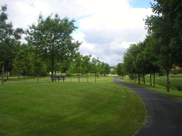 Cây xanh có tác dụng chống lại sự ô nhiễm nguồn nước