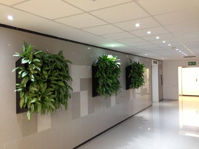 Cây xanh trong văn phòng làm việc giúp nội thất trông sang trọng hơn