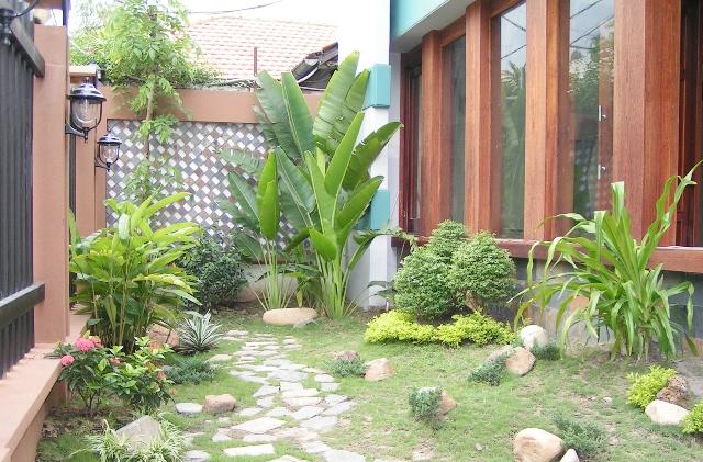 Image result for cây sân vườn