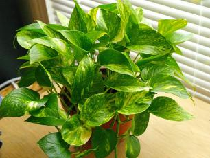 5 Fabulous Houseplants that Work as Living Air Purifiers