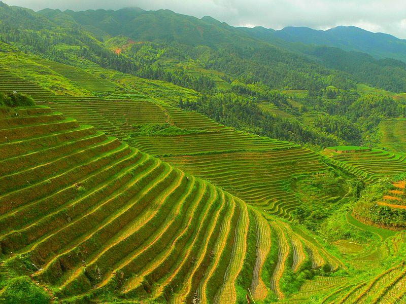 Cảnh quan nông nghiệp vùng nhiệt đới - cảnh quan là gì?