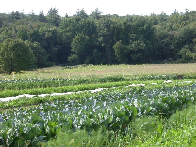 Cảnh quan nông nghiệp vùng ôn đới - cảnh quan là gì?
