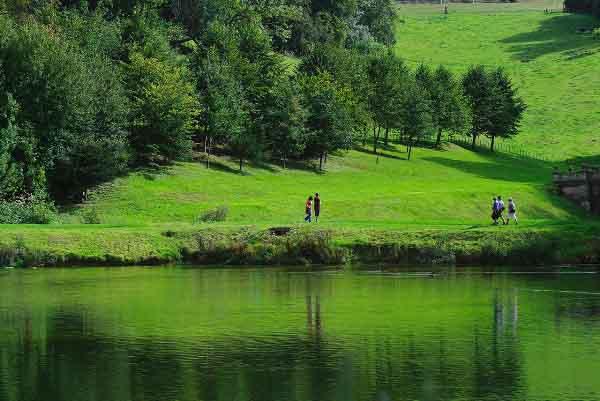 Cây xanh có tác dụng bảo tồn năng lượng