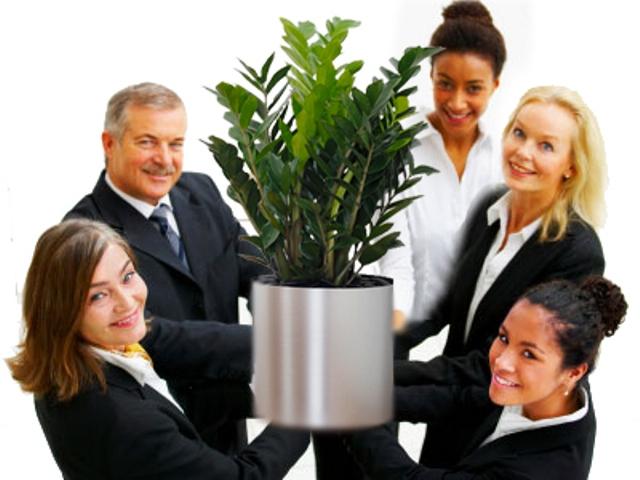 cây xanh duy trì thái độ làm việc tốt của nhân viên
